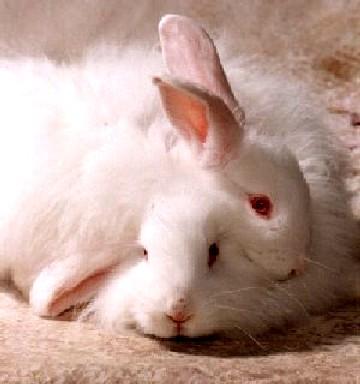 animal testing on makeup. Difference- Animal Testing