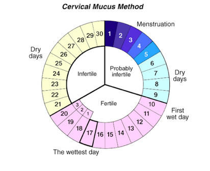 When is the best time for sex during ovulation