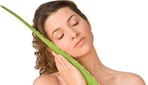aloe vera benefits Aloe Vera: Beauty Benefits