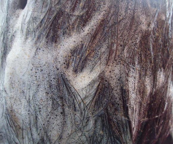 Herbal Hair Wash 6