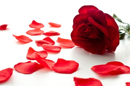 Rose petals with butter or ghee for lips