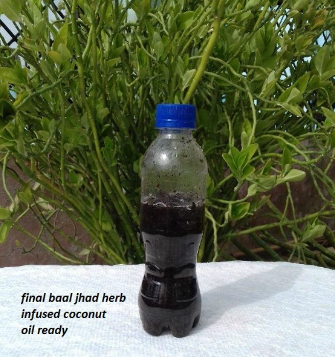 diy-baal-jhad-herb-infused-coconut-oil-for-hair-growth-step-8